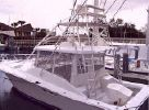Luhrs Open Fishimage