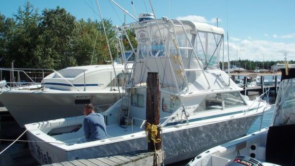 Bertram 28 Flybridge CRUISER Photo 1