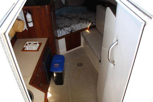 Shamrock 290 Walkaround image