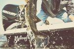 Yellowfin 21 Hybridimage