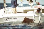 Yellowfin 29 Offshoreimage