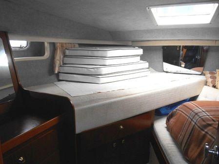 Birchwood TS37 image