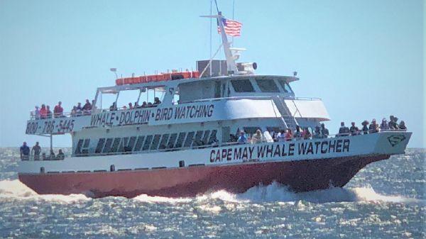 Aluminum boats inc whale watch dinner ferry